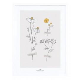 Affiche encadrée fleurs des champs Lilipinso