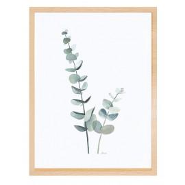 Affiche avec cadre nature tiges d'eucalyptus Lilipinso