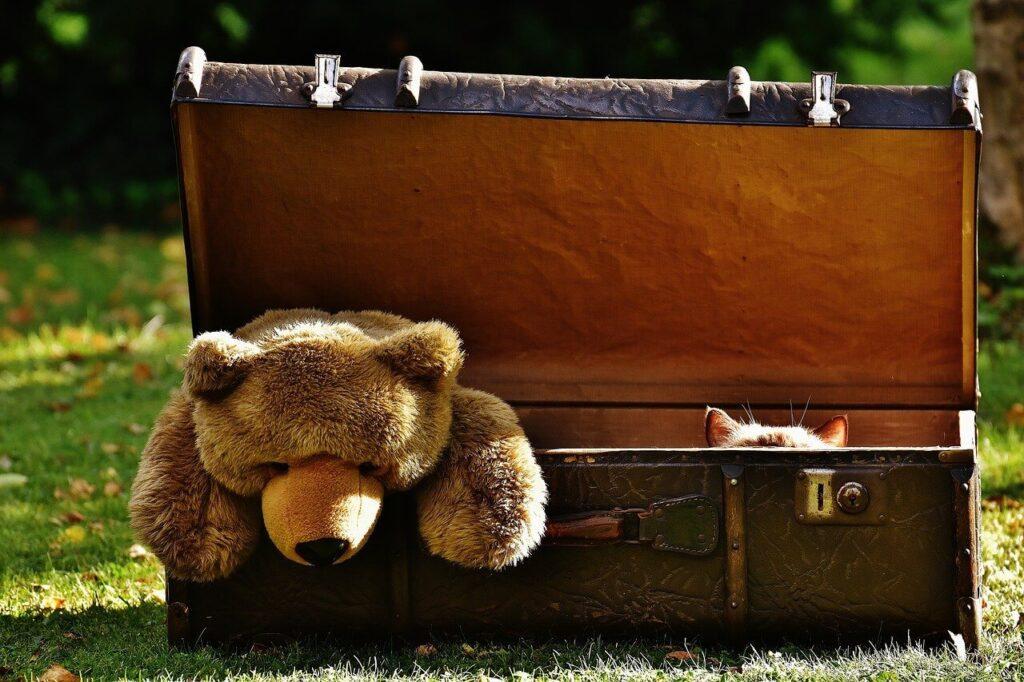 ours brun dans une valisee